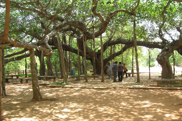 Auroville to Pondicherry